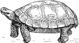 fables turtle